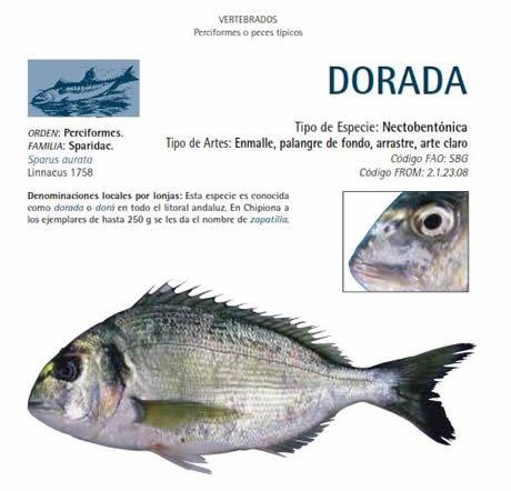 Especies pesquera baja litoral andaluz